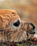 《我和藏羚羊》