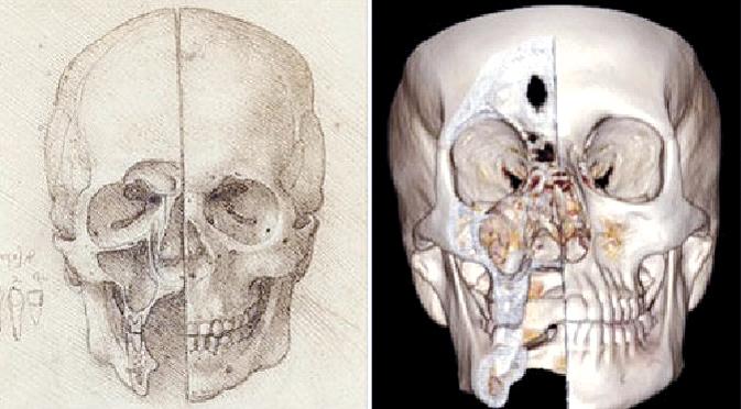 达芬奇手绘的头骨解剖图
