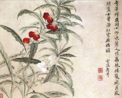 凤仙花图(纸本设色)恽寿平(清)